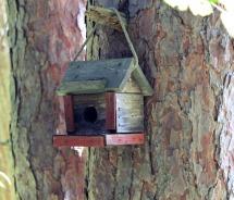 Birdhouse 9