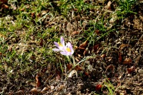 First Sign of Spring 2