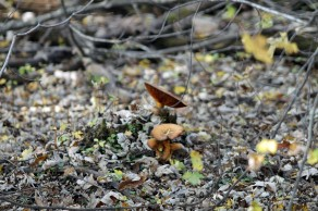 Great Meadows Fungus 1