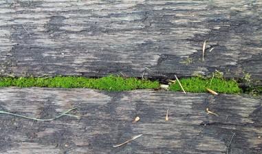 Maine Moss 7