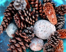 Pine Cones and Rocks 2