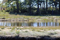 The Marsh 2-Rachel Carson Refuge