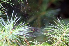 The Web-Rachel Carson Refuge