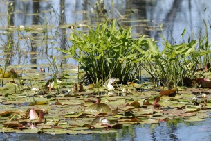 Wetlands 6-Ipswich Audubon