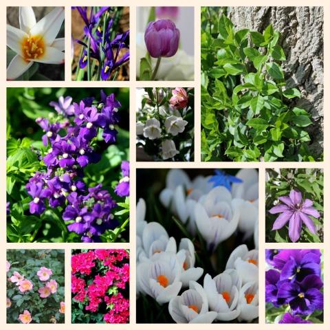 Flowers-medium file