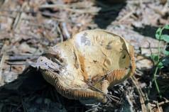 Fungus 3-Rachel Carson Refuge