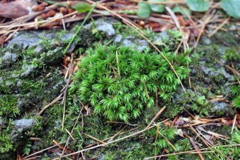 Maine Moss 5