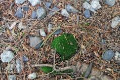 Maine Moss 8