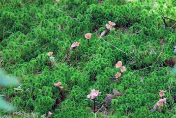 Moss & Mushrooms-Rachel Carson Refuge