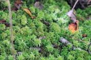 Moss-Wells Estuarine Research Reserve