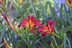 Mt Auburn Flora 1