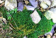 Rocks and Moss