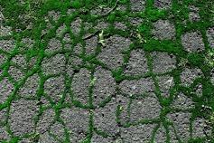 Street Moss 10