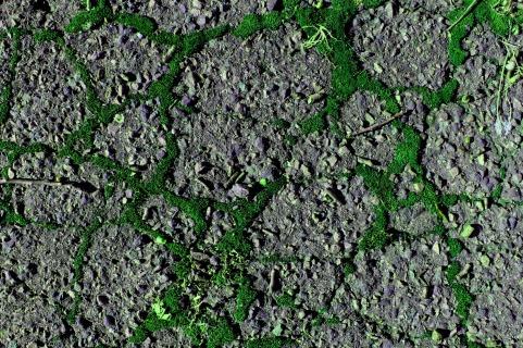 Street Moss 11