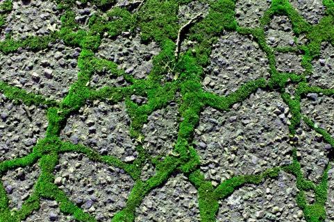 Street Moss 14