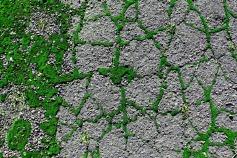Street Moss 16