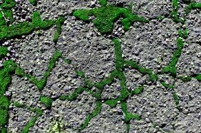 Street Moss 17