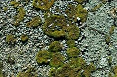 Street Moss 5