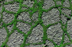 Street Moss 7