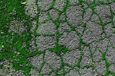 Street Moss 8