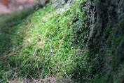 Tree Moss 5-Rachel Carson Refuge
