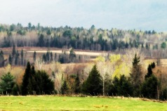Early Spring, Vermont
