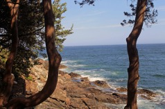Trees and Water 4-Marginal Way
