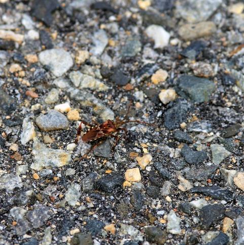 Hideous Bug