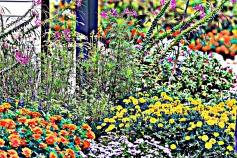 Kittery Garden 2-HDR
