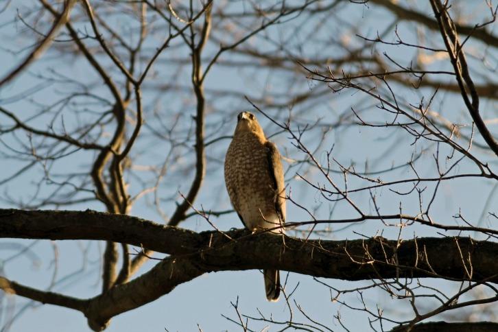 The Falcon's Visit
