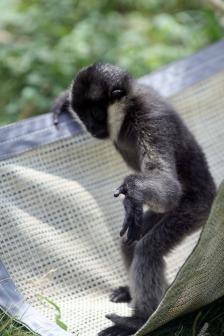 Baby Monkey 1