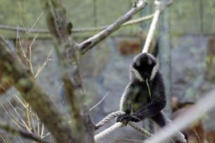 Baby Monkey 3