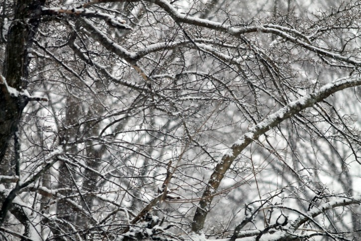 Falling Snow 2