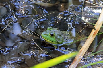 Michigan J Frog 3