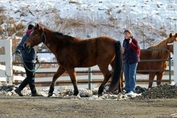 Tending to Horses