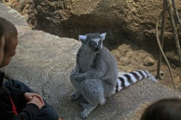 The Lemur 1
