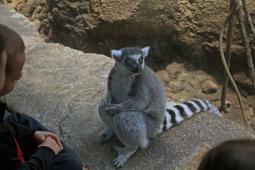 The Lemur 1
