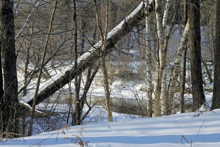 Winter Scene 9