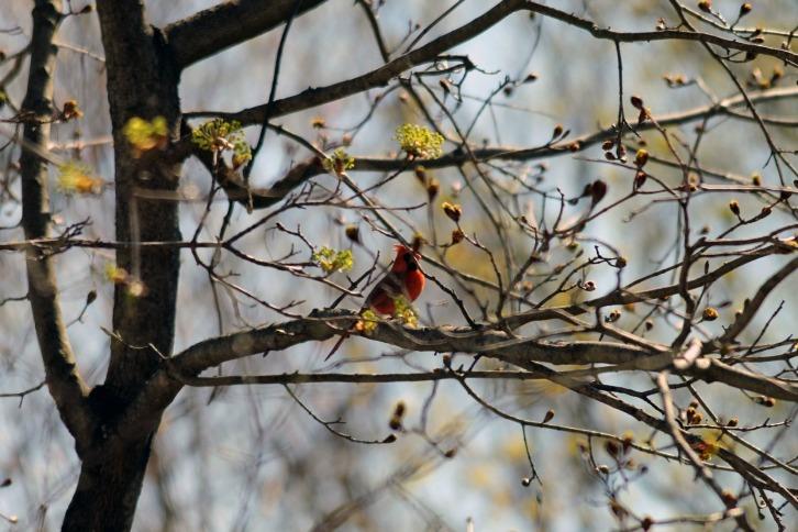 Boy in the Tree