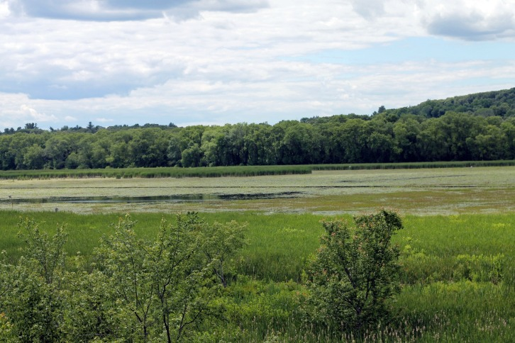 The Marsh, Great Meadows, Concord, Massachusetts