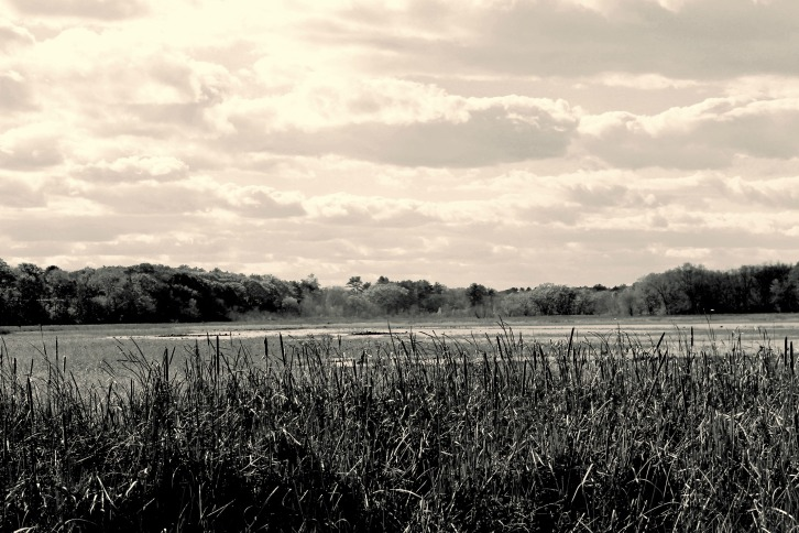 Great Meadows, Creamy Black & White