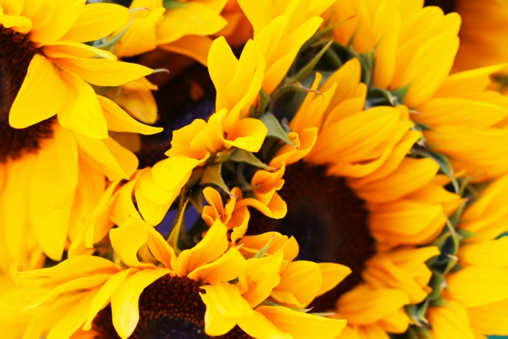 Sunflowers, Haymarket Square, Boston, Massachusetts