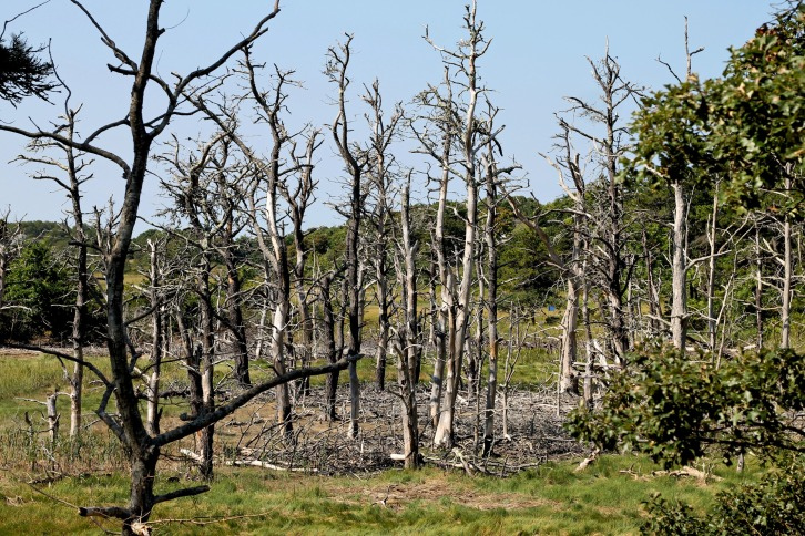 Bare Trees, The Province Lands