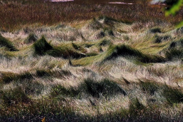 Grass Waves, Rachel Carson National Wildlife Refuge, Wells, Maine
