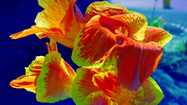Sunshine Flowers (Special Effects)