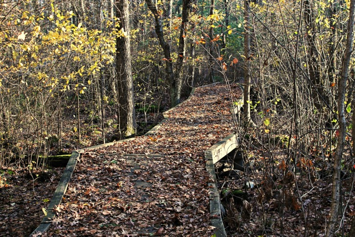 The Crooked Path at Minuteman Trail, Lexington-Concord, MA