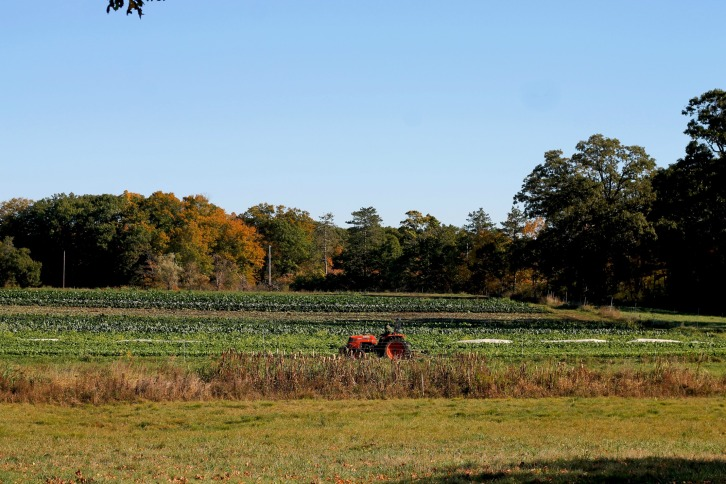 Fall Harvest, Appleton Farms, Ipswich, Massachusetts