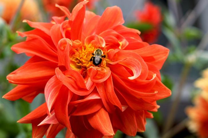 More Bee Heaven