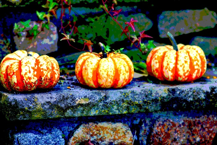 Miniature Pumpkins, Posterized