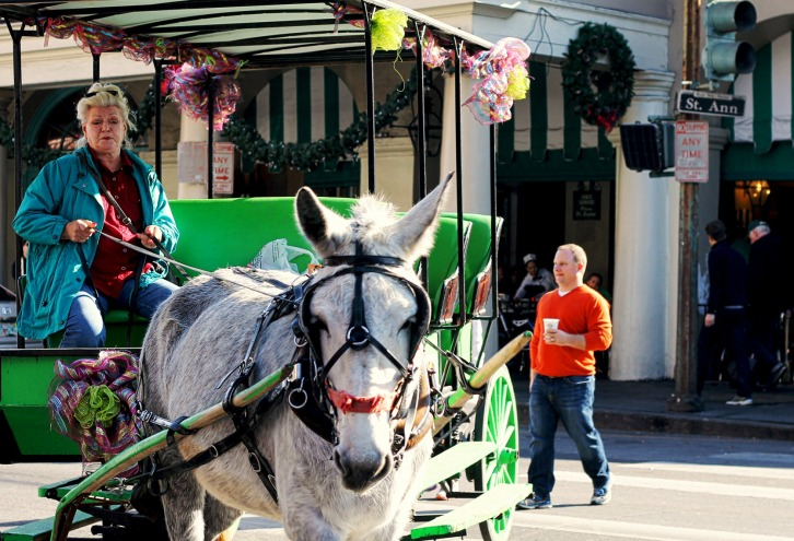 Horse & Buggy, Jackson Square, New Orleans